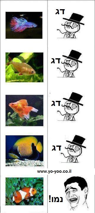 זיהוי דגים