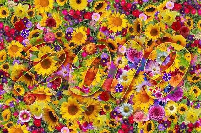 2019 פרחים