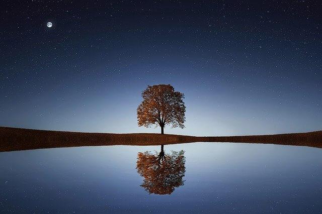 עץ יפה באגם