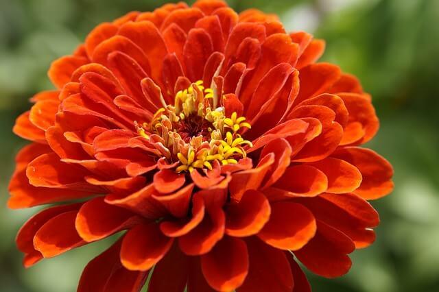 פרח יפה