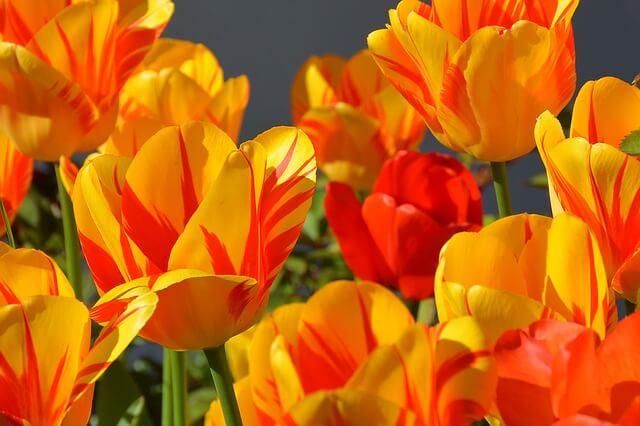 פרחים צבעוניים