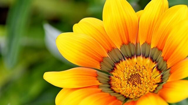 פרח צהוב יפה