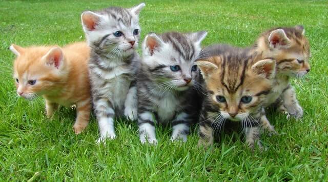תמונה של חתולים