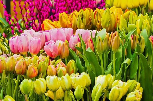 תמונה של אביב