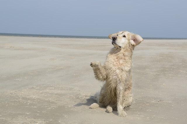 כלב בחוף