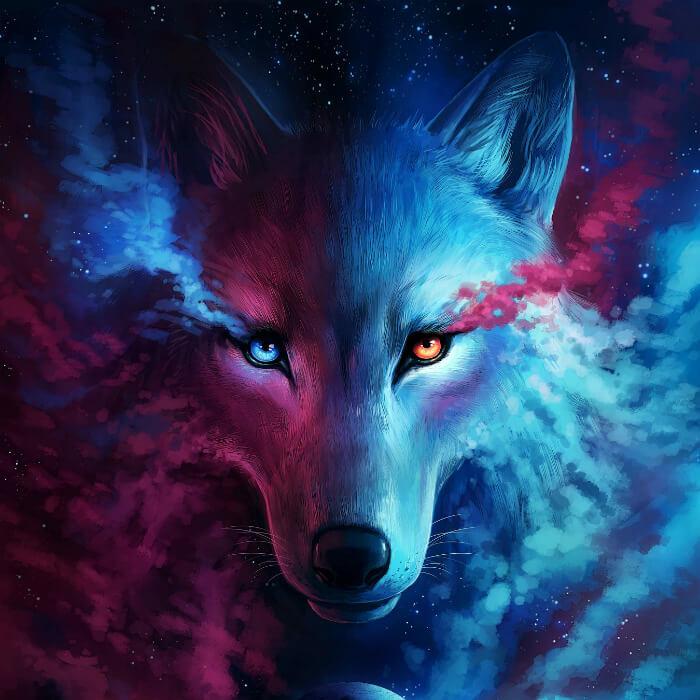 זאב מצויר
