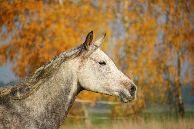 סוס בטבע 2