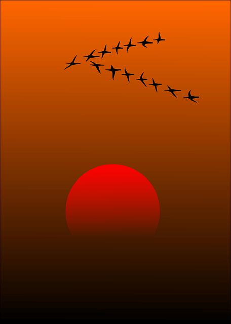 ציפורים בשקיעה