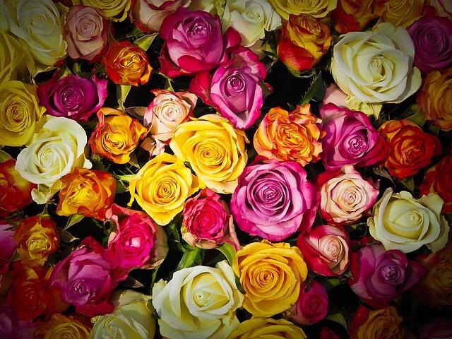 ורדים צבעוניים