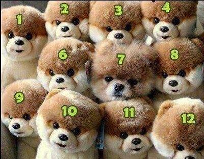 בובה של כלב