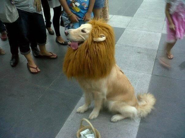 אריה כלב