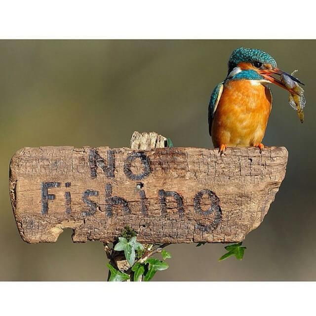 אסור לדוג