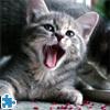 תחברו את כל חלקי הפזאל עד שתגיעו לתמונה שלמה של חתול.