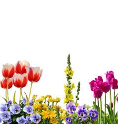 כתיבה על פרחים