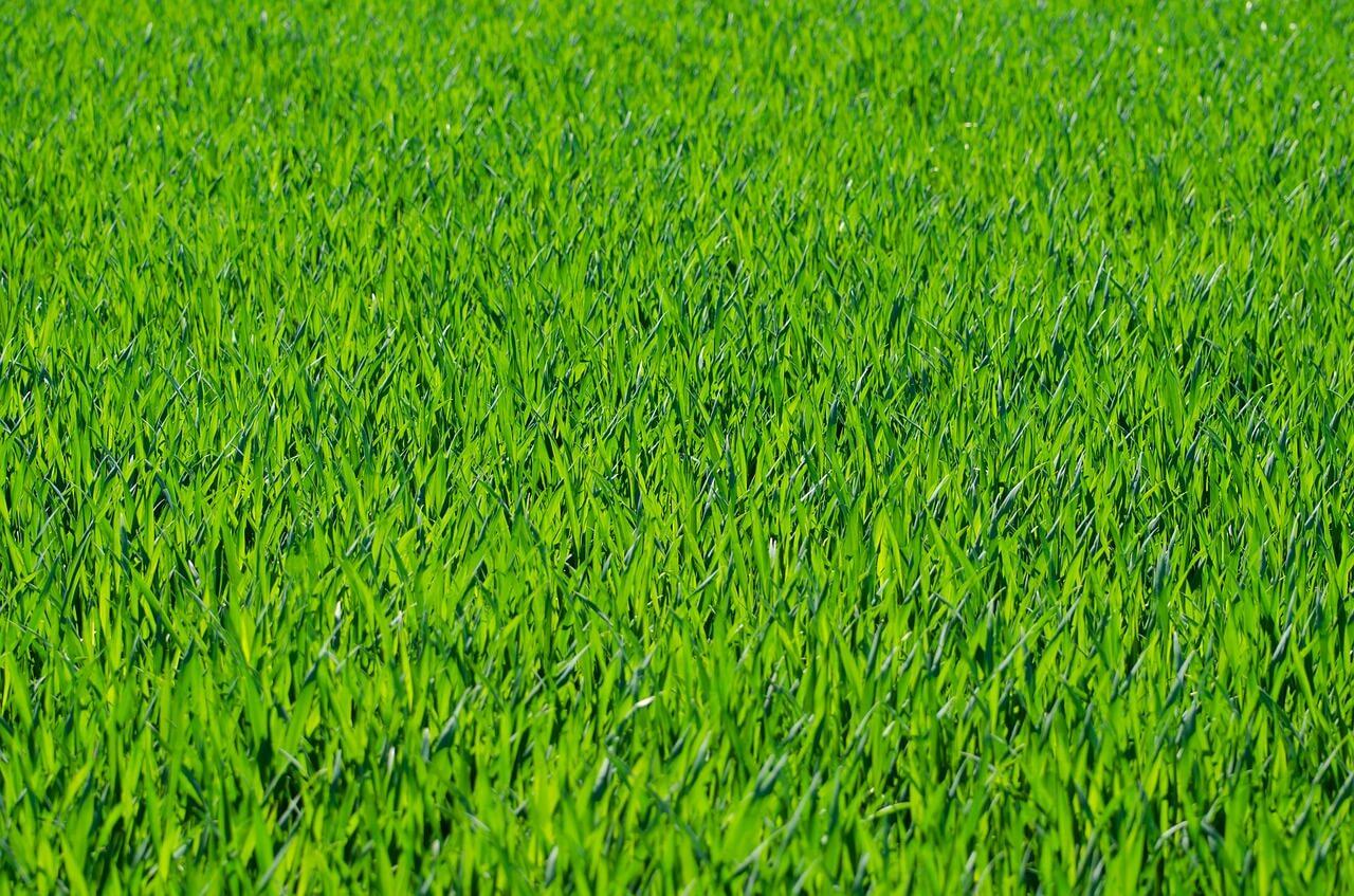 רקע של דשא