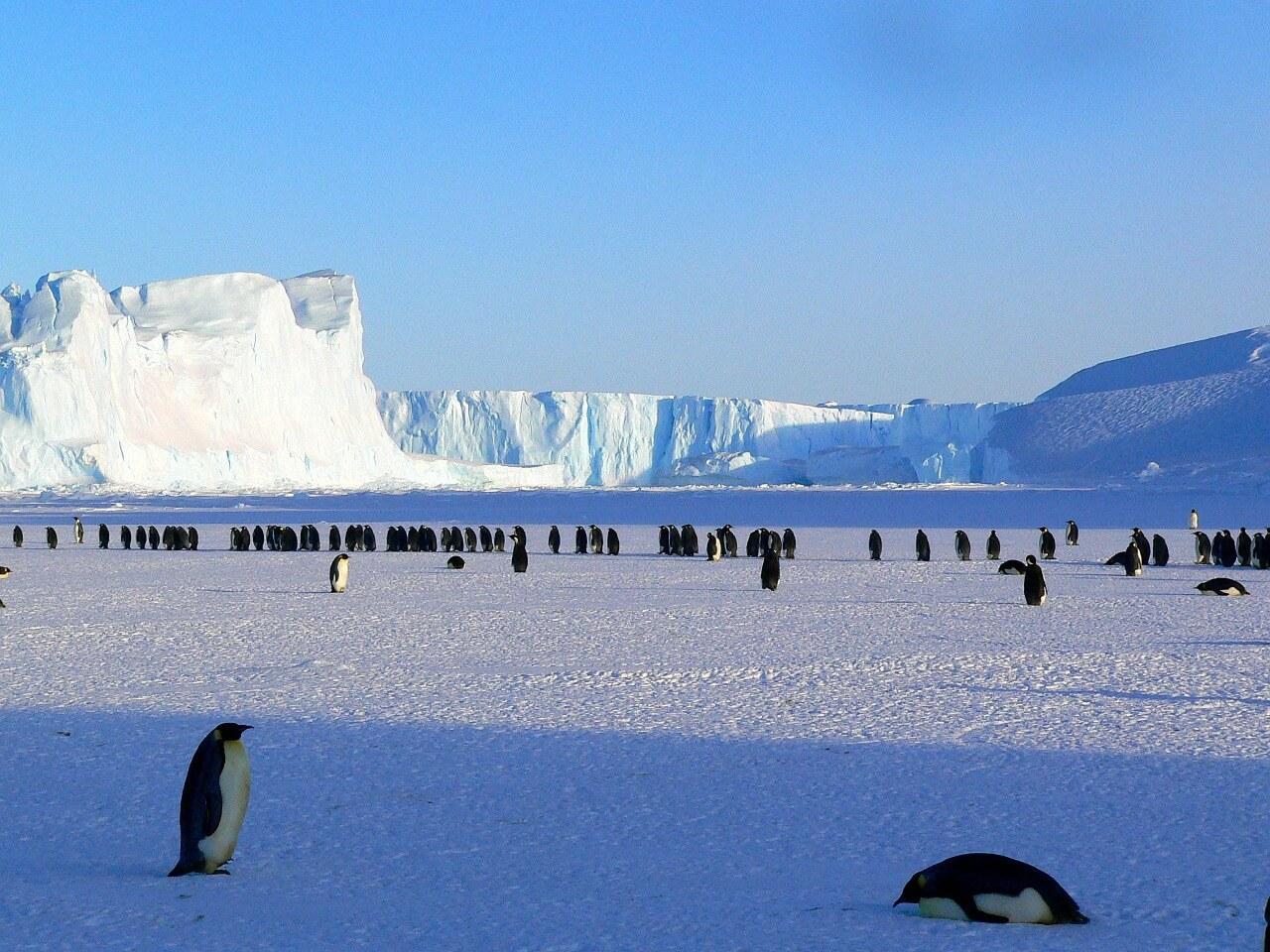 פינגוויניים