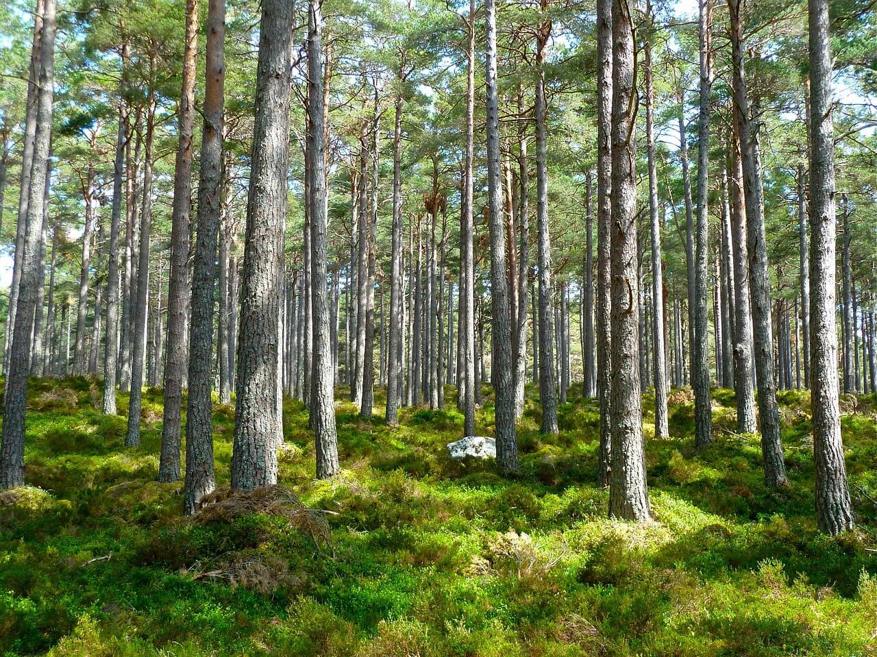 עצים - יער