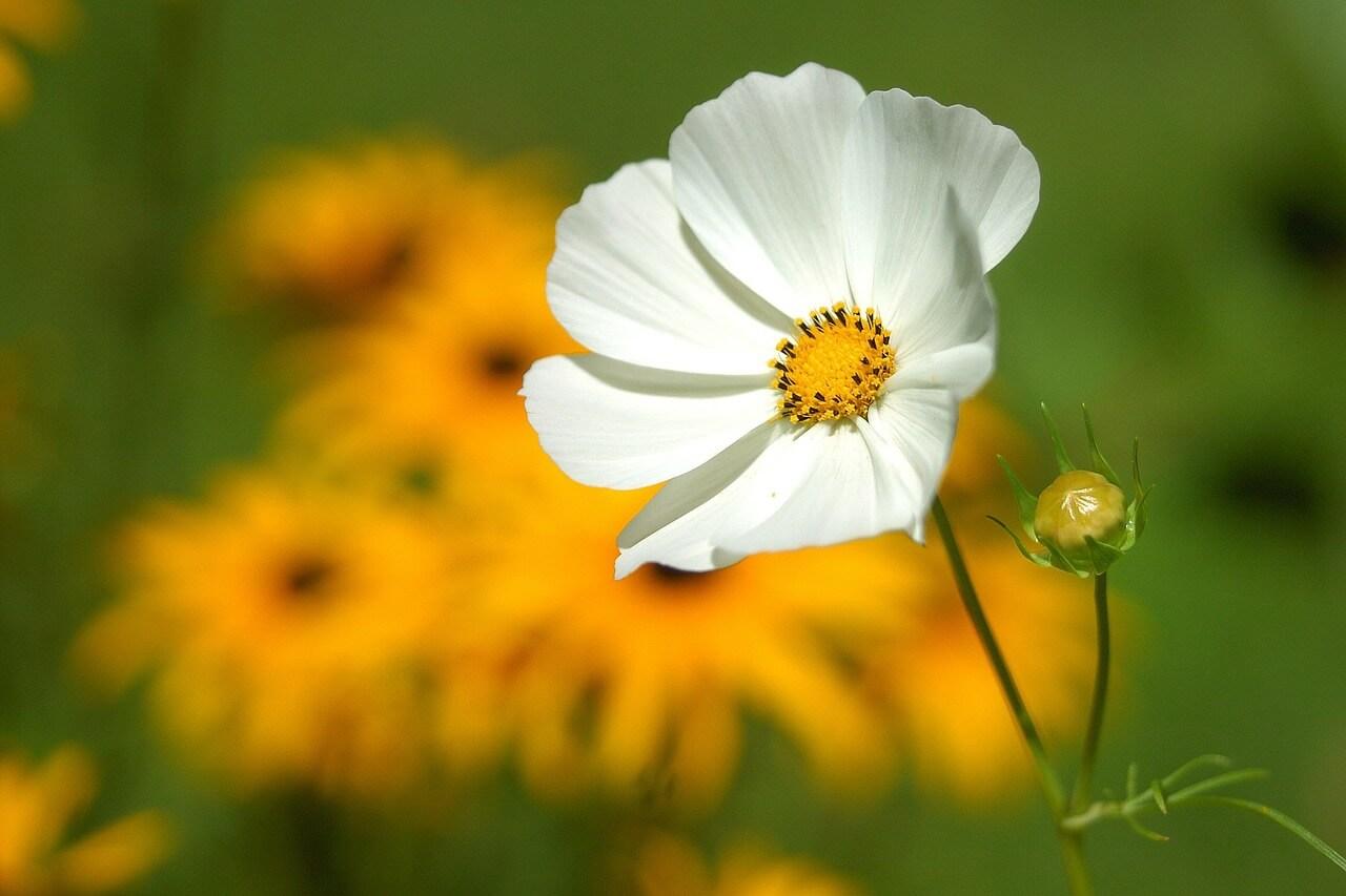 רקע של פרח