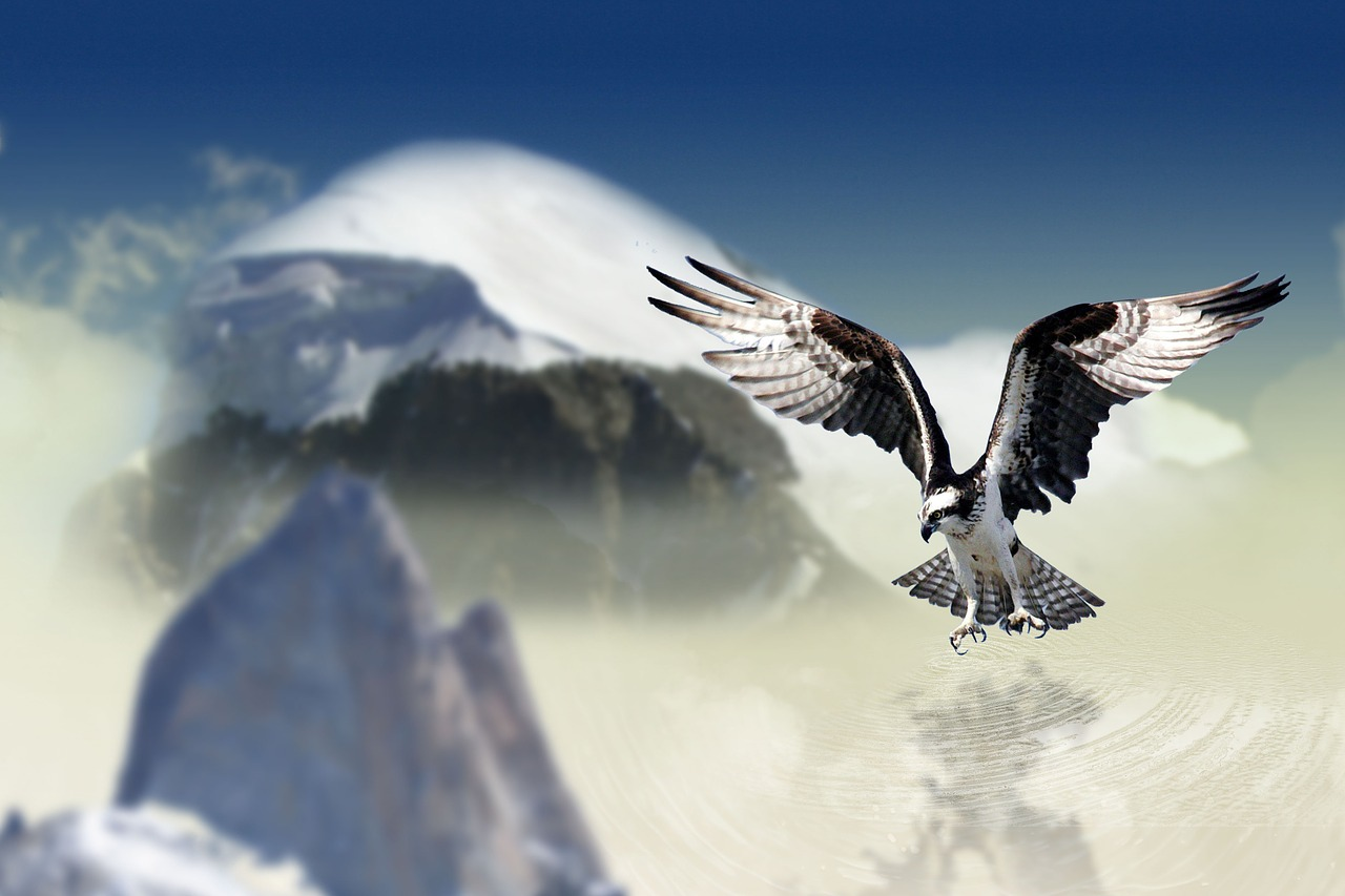 רקע ציפור יפה