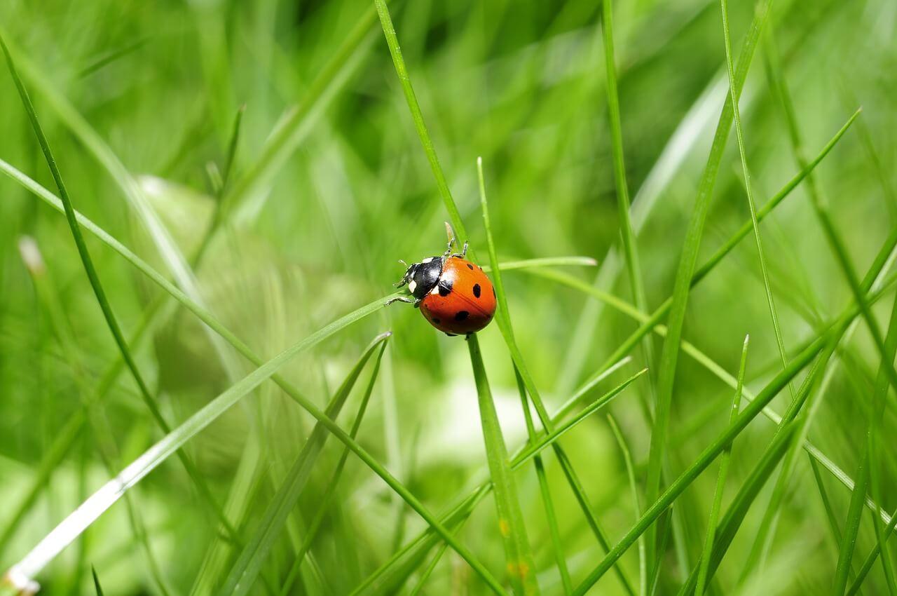 חיפושיות יפה