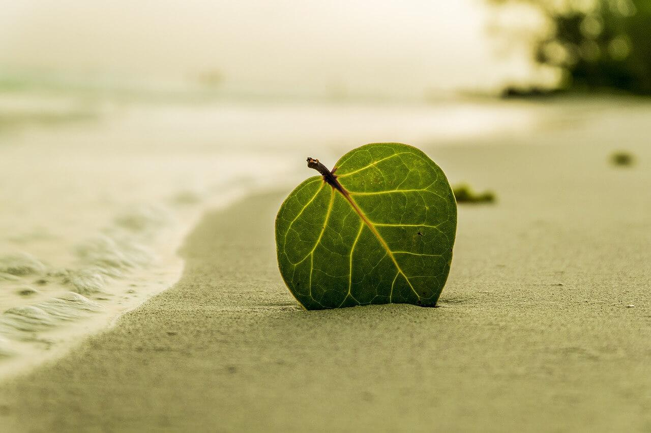 חוף יפה