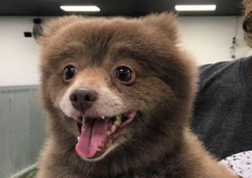 כלב או דוב