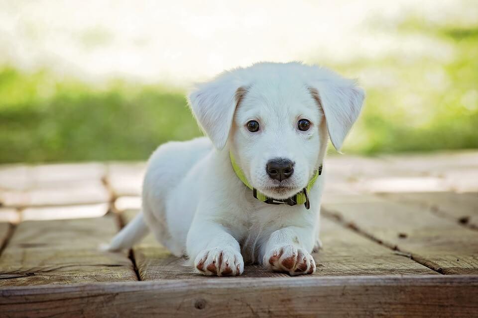 כלב חמוד
