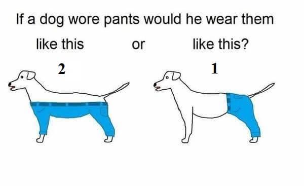 איך כלבים צריכים ללבוש מכנסיים