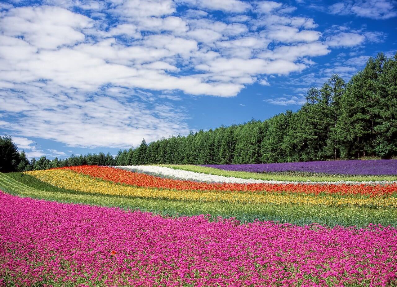 שדה צבעוני