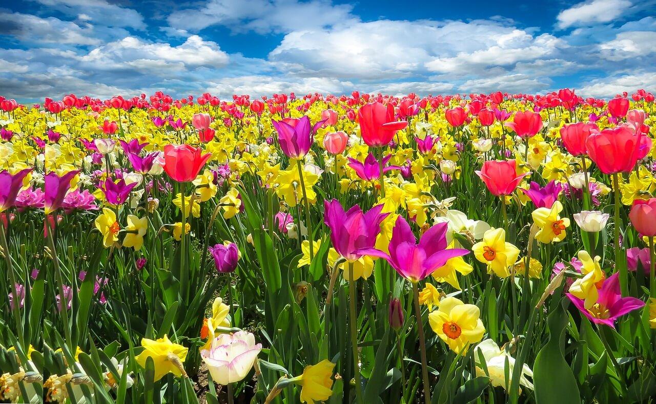 רקע של פרחים