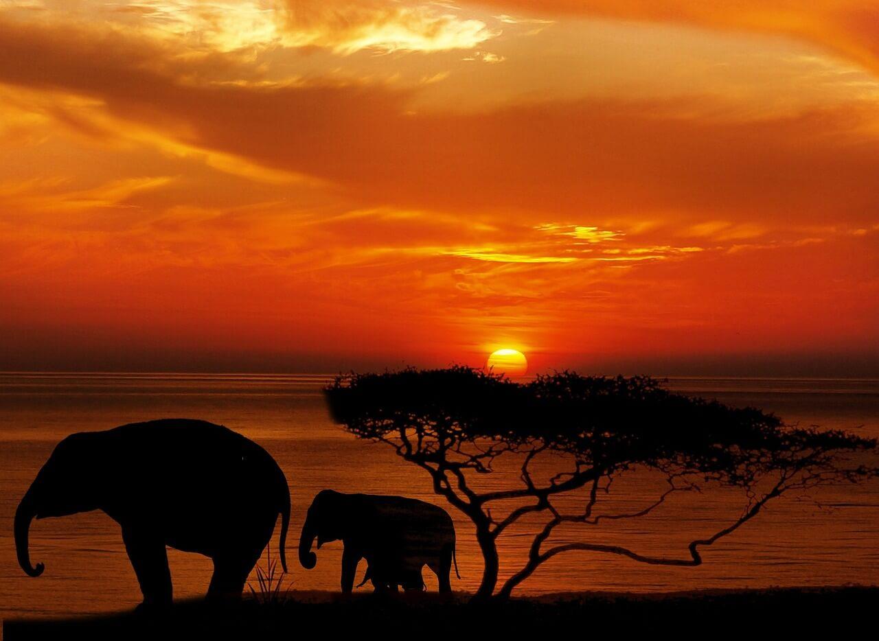 פילים בשקיעה
