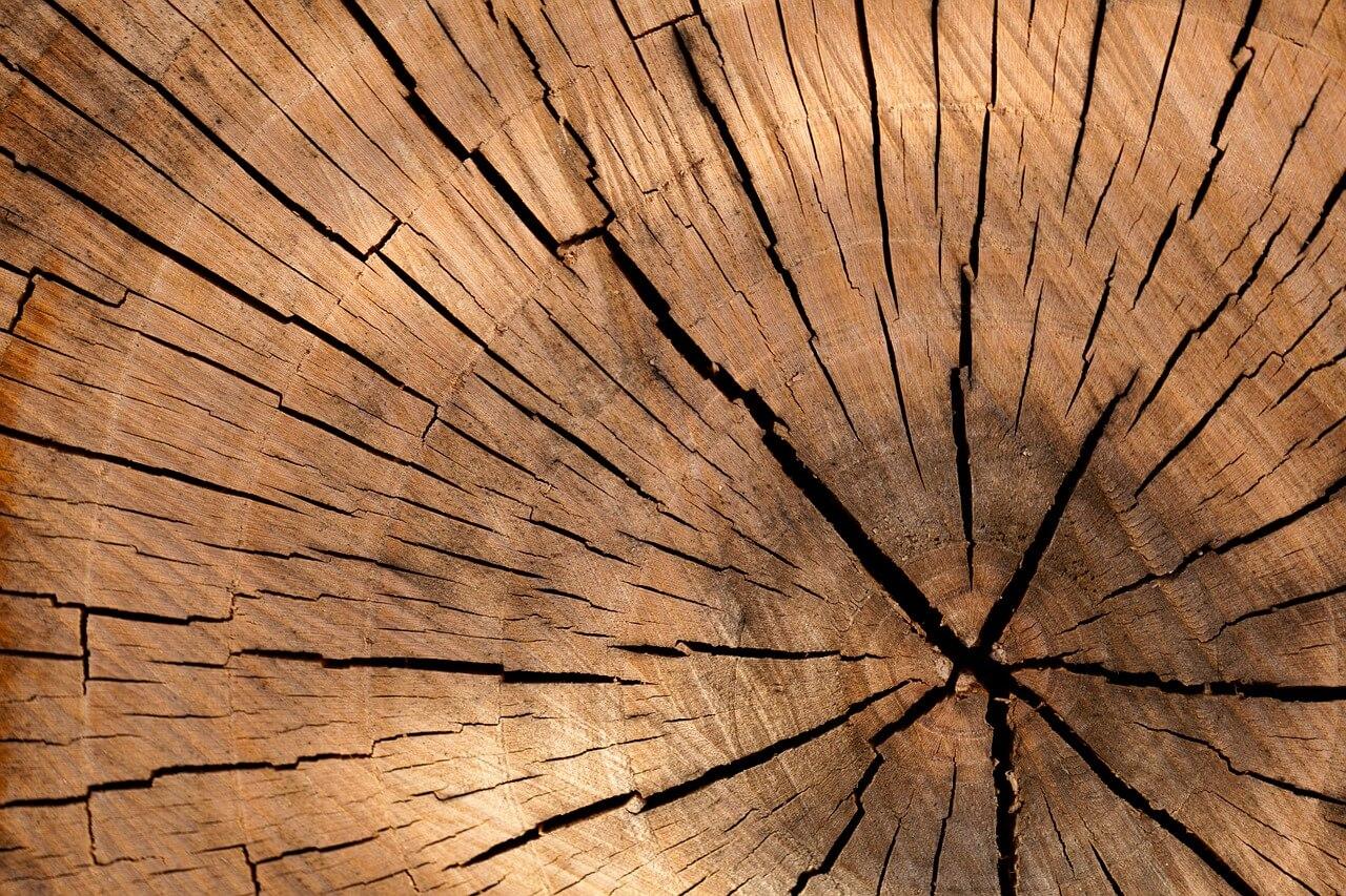 רקע של גזע עץ