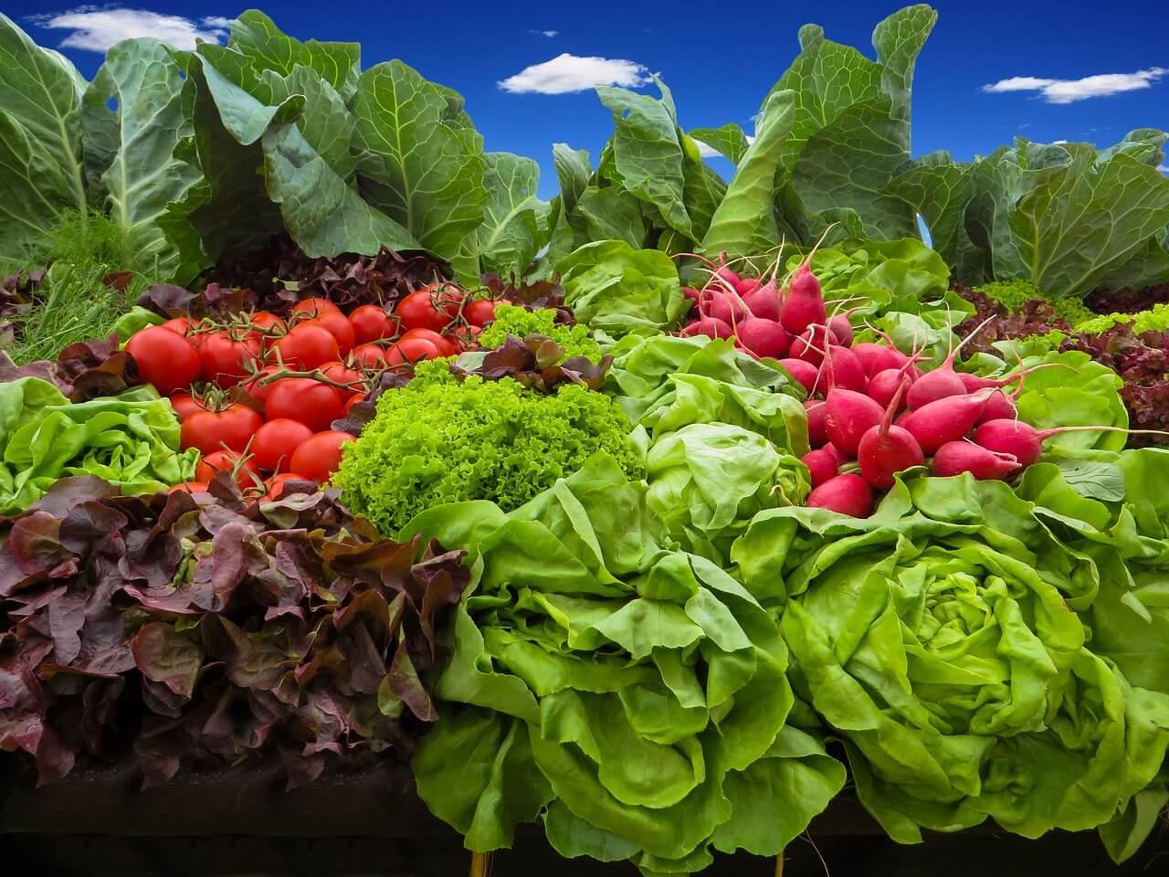 רקע של ירקות