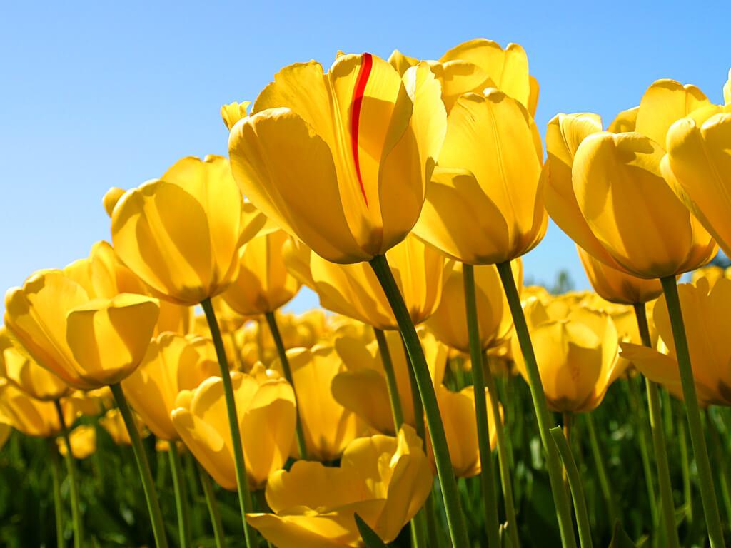 פרחים צהובים