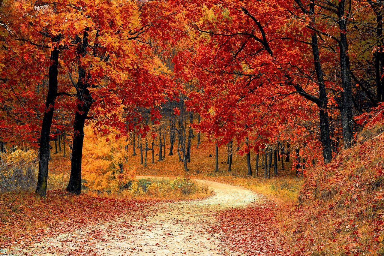 יער בסתיו