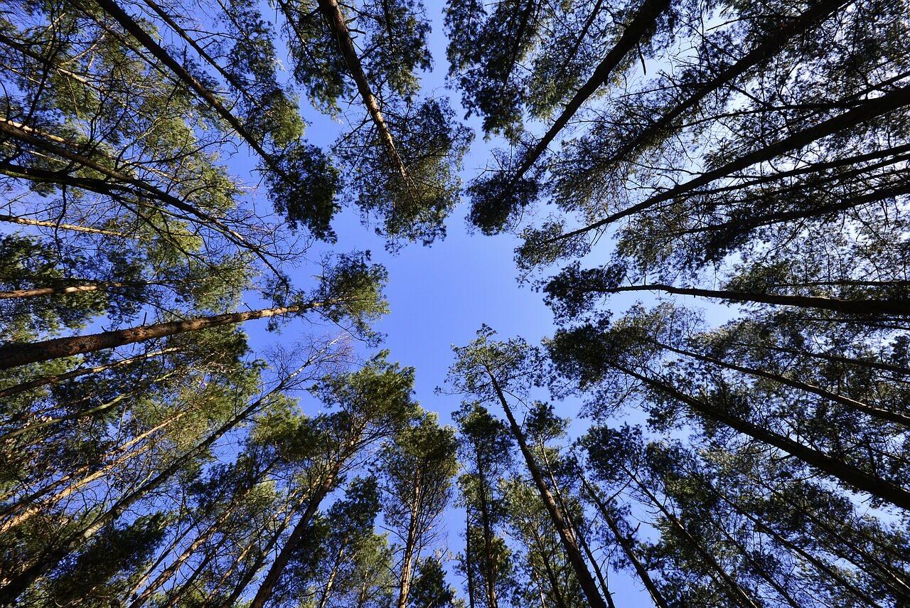 רקע של עצים