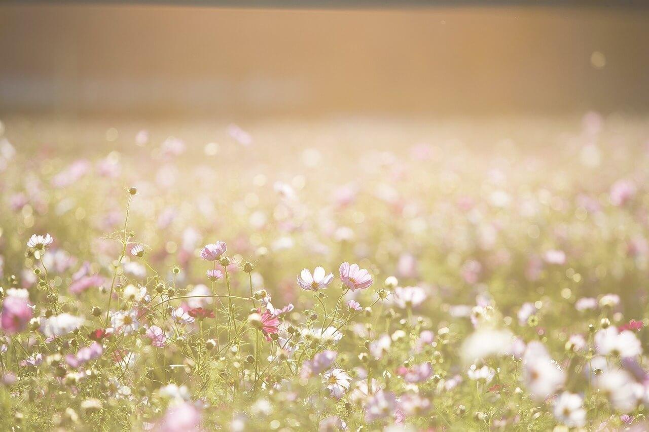 רקע של פרחים 2