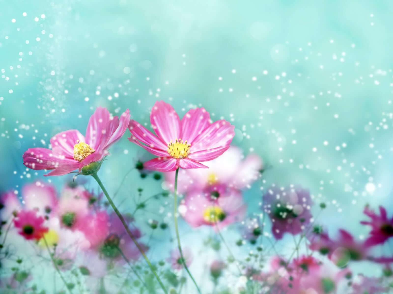 רקע של פרחים יפים