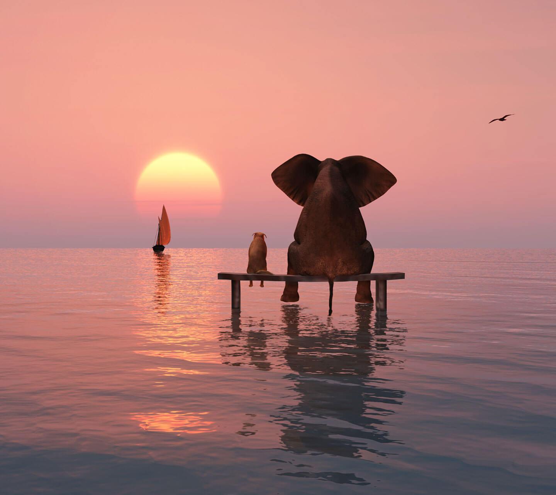 הפילים בים
