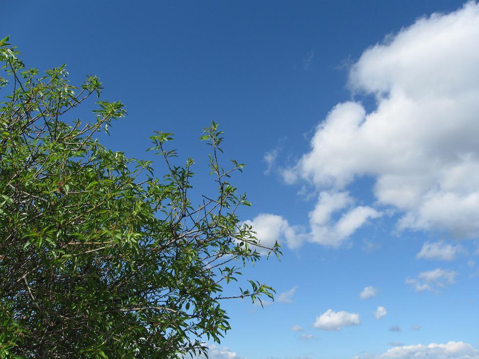 עננים ועץ