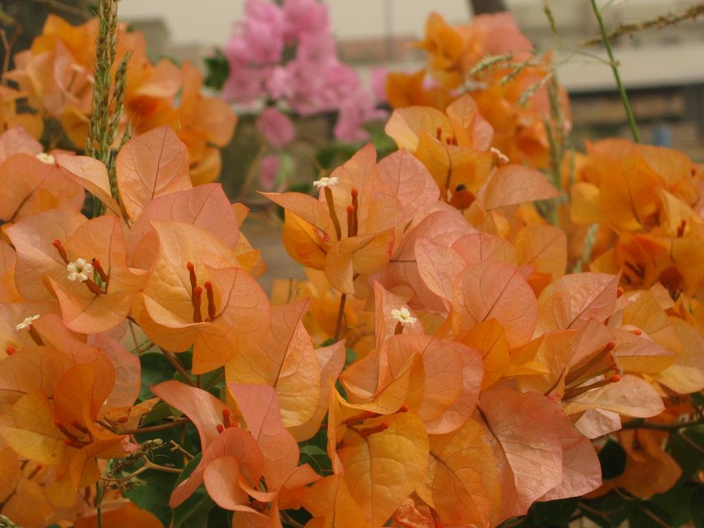 פרחים כתומים