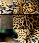 פאזלים של חיות