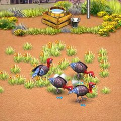 משחק שיגעון בחווה 3  , משחק חדש בגירסת אמריקן פאי , בואו לגדל תרנגולי הודו כבשים ועוד , תגדלו חיות תאספו את התוצר שלהם ותרוויחו כסף