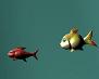 דג גדול אוכל דג קטן