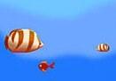 דג אוכל דג 3