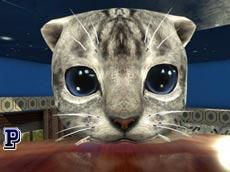 סימולטור חתול