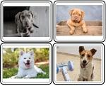 זיכרון כלבים