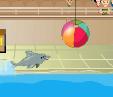 מופע דולפינים 1