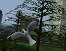 לעוף כמו ציפור 3