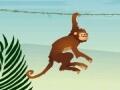 הקוף הקופץ